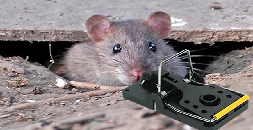 Schlagfalle für Mause